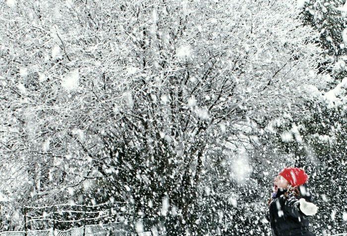 Nature Winter Snow Enjoying Life Eye4photography
