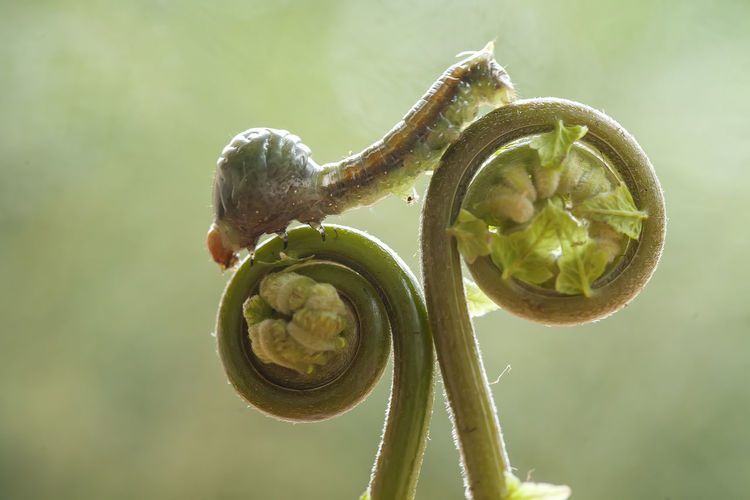 Close-up of flower bud growing outdoors