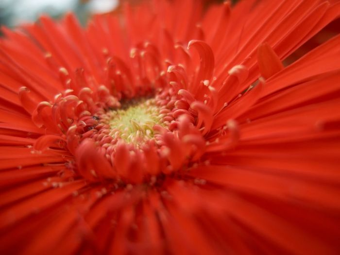 Red Flowerporn
