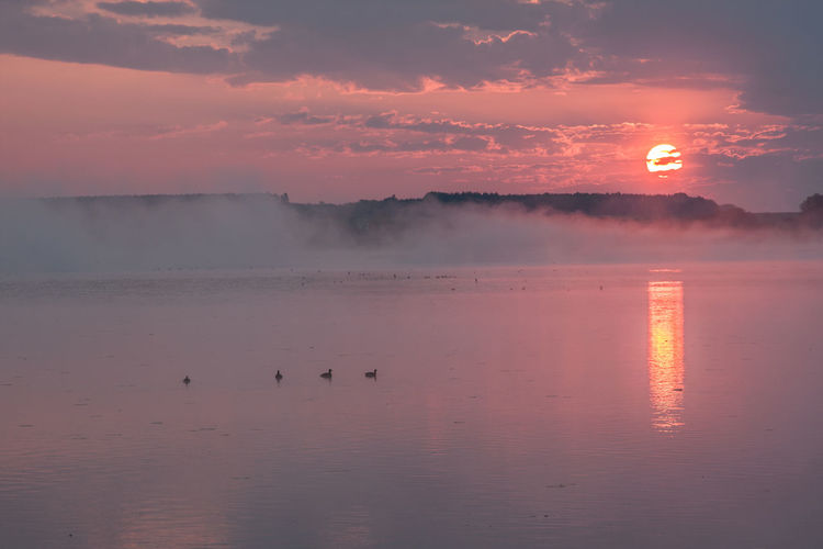 Federsee Animal Themes Animals In The Wild Beauty In Nature Bird Cloud - Sky Day Fog Foggy Morning Nature No People Orange Color Outdoors Reflection Scenics Sky Sun Sunset Tranquil Scene Tranquility Water