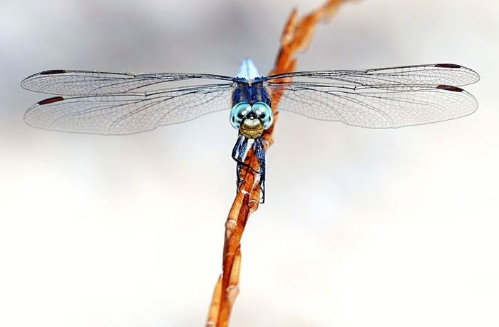 Insect Animal Wing Macro Animal Themes Damselfly Focus On Foreground Animal Wildlife One Animal Nature Animals In The Wild No People Looking At Camera Outdoors Close-up Blue Day Fragility Beauty In Nature Splashing Droplet Eyelash
