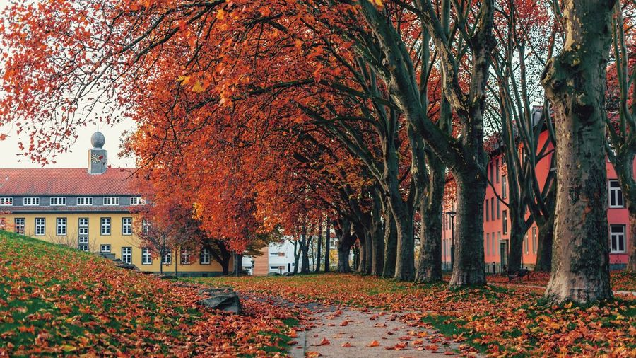 Autumn leaves fallen in park