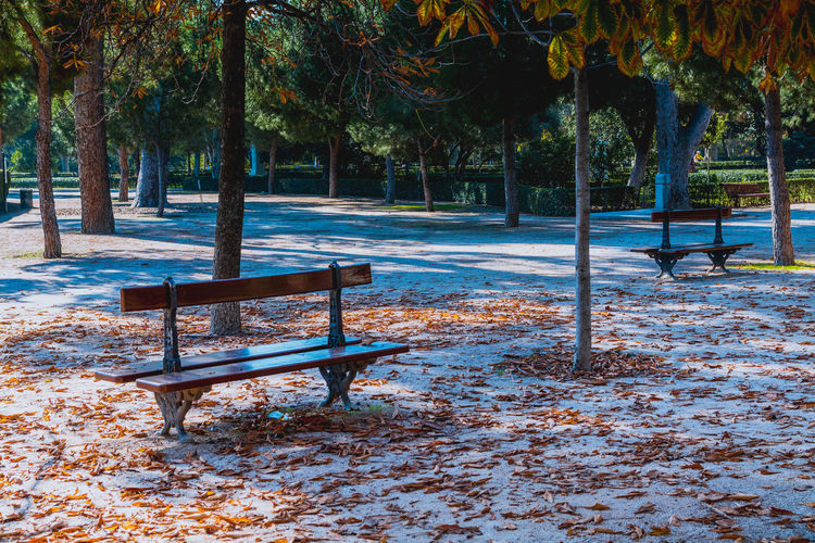 Absence Autumn Bench Empty No People Park Park - Man Made Space Park Bench Retiro Season  Seat Shadow Sunlight Tranquil Scene Tranquility Tree Trees