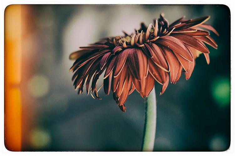 Flowers Vintage Taking Photos EyeEm Best Edits