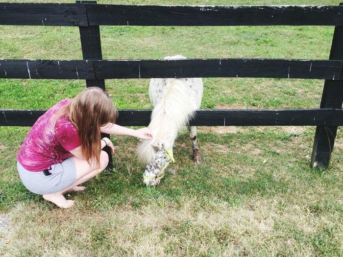 Cow in farm