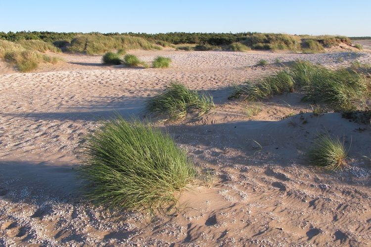 Arid Climate Beach Day Environment Growth Land Landscape Nature No People Outdoors Plant Sand Sky Sunlight Tranquil Scene Tranquility