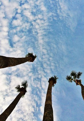 Palms Tree Cloud - Sky Low Angle View Palm Tree Sky No People Bird Outdoors Day Tempe Az Palm Trees