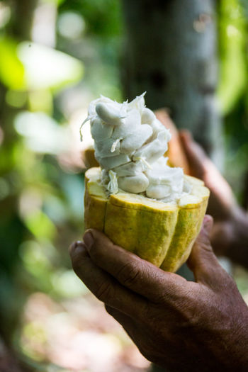 Cropped hands of man holding cacao
