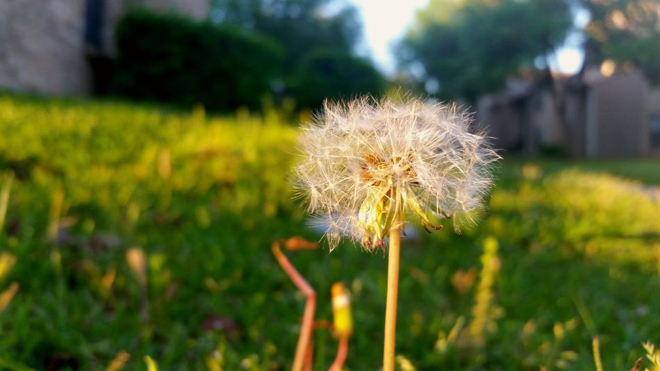 My one wish is to be able to walk beside you underneath the cloudy blue skies and lay beside you under the starry night sky. To spend a lifetime or more underneath the same sky side by side. Rain or shine. Dandelion Seeds Make A Wish Enternity Love Warmthandsunshine Dreamer's Vision Deep Thoughts Finding Inspiration Hidden Peace Capture The Moment Hello World Enjoying Life
