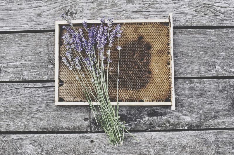smell of lavender and honey Deceptively Simple Fall Beauty Enjoying Life Getting Inspired Honey