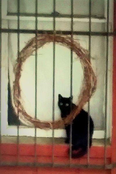 Black Cat Gothic Cat Lovers Cat