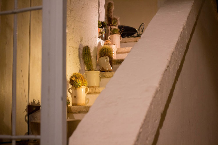 Cactus Cactus Garden City Life Empty Streets Exterior Monopoli Night City Stairs Urban Lifestyle Architecture Building Exterior Detail Details Italy Night No People Outdoors Potted Plant Resort Urban Life Urban Living Window Shutter