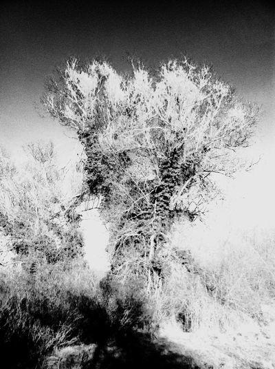Black And White Black & White Blackandwhite Trees Tree Nature