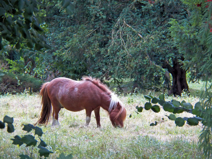 Twice colors pony is eating BIG Bicolor Pony Blond Part Mane Eating One Pony Poney White Brown Tree Frame Round Nature Day Outdoor White Brown Mane Mane Grazing Grass Pony Herbivorous