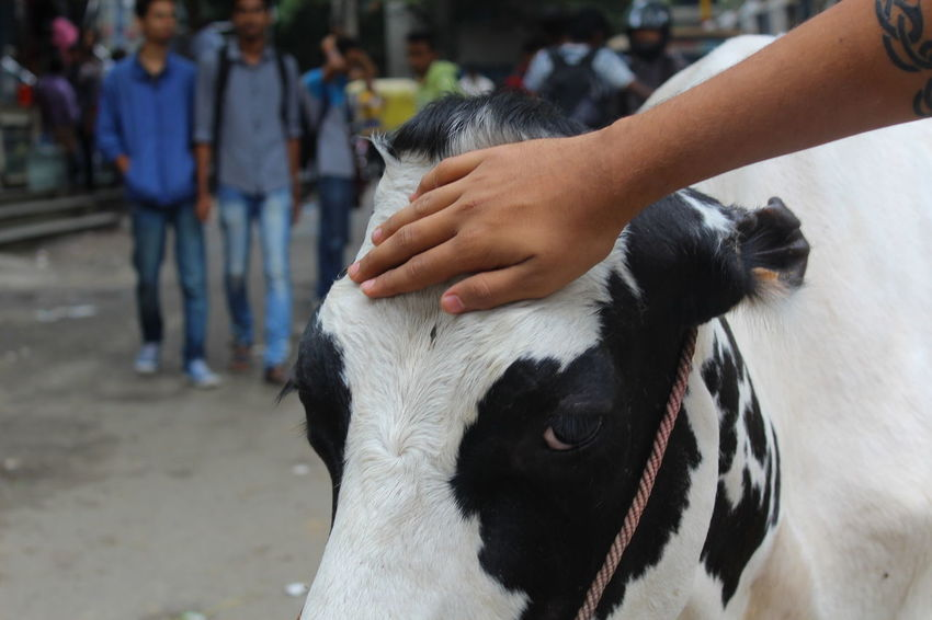 How do I caption this?... Cow Shantinagar Check This Out Canon EOS 1300D Canon Photography Bangalore India 43 Golden Moments Original Experiences Feel The Journey My Experiences Animals Friendly College Life College The Week On Eyem EyeEm Best Shots Natural Light Portrait Showcase June