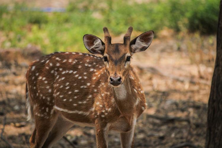 Look ! Deer