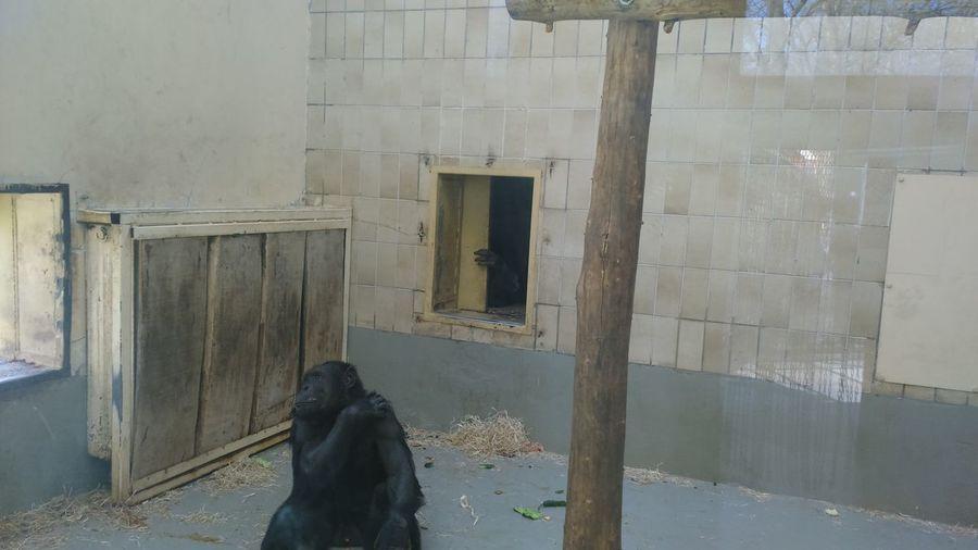 Live In Zoo Monkey Zoo Animal