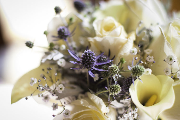 Flowering Plant Flower Plant Fragility Vulnerability  Freshness Beauty In Nature Close-up Petal Selective Focus Growth Flower Head Inflorescence Nature No People Pollen White Color Day Indoors  Yellow Purple Flower Arrangement Bouquet
