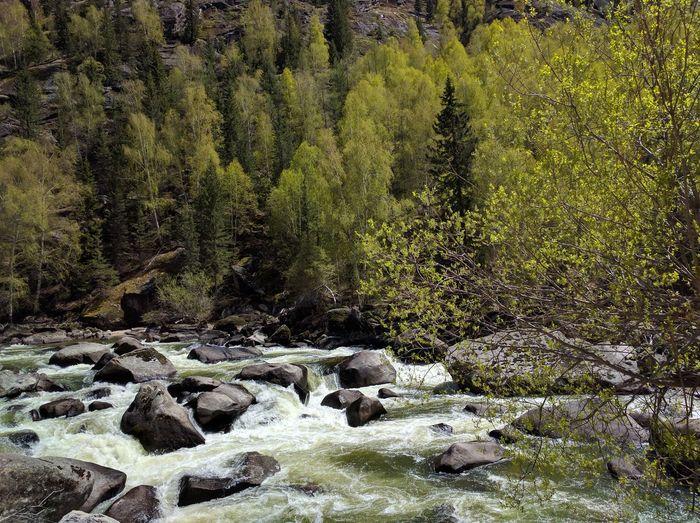 Upstream of