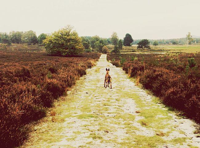 EyeNatureLover Dog Panorama Belgium Foreverlove 💘