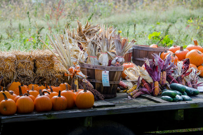 Country roadside stand  holds indian corn, pumpkins,  straw bales and other fall veggies