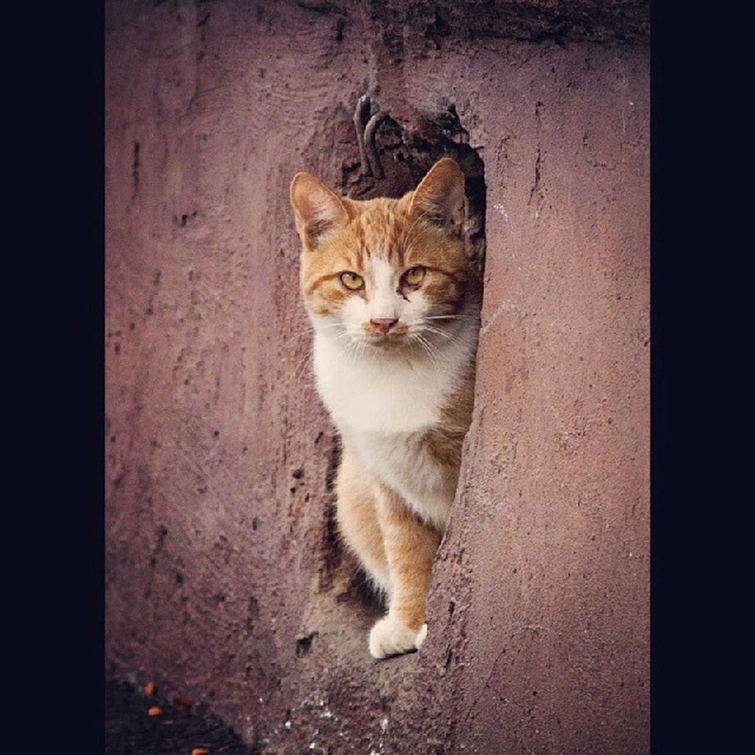 domestic cat, cat, pets, one animal, domestic animals, feline, animal themes, mammal, whisker, portrait, looking at camera, sitting, staring, alertness, wall - building feature, front view, no people, full length, close-up