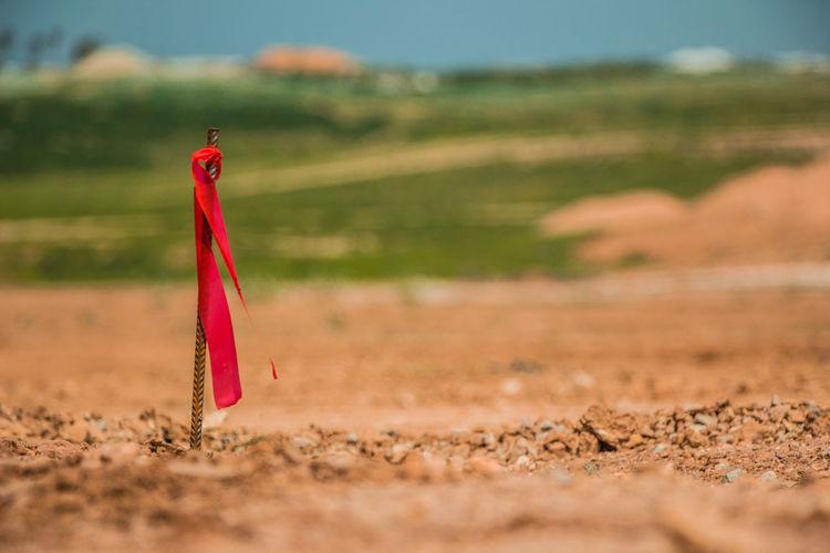 Red umbrella on field