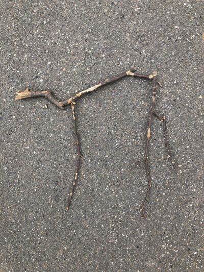 High angle view of dry leaf on road