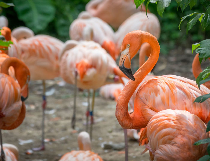 Animal Animal Neck Animal Themes Animal Wildlife Animals In The Wild Beauty In Nature Bird Day Flamingo Flock Of Birds Focus On Foreground Group Of Animals Large Group Of Animals Nature No People Orange Color Outdoors Pink Color Selective Focus Vertebrate Water