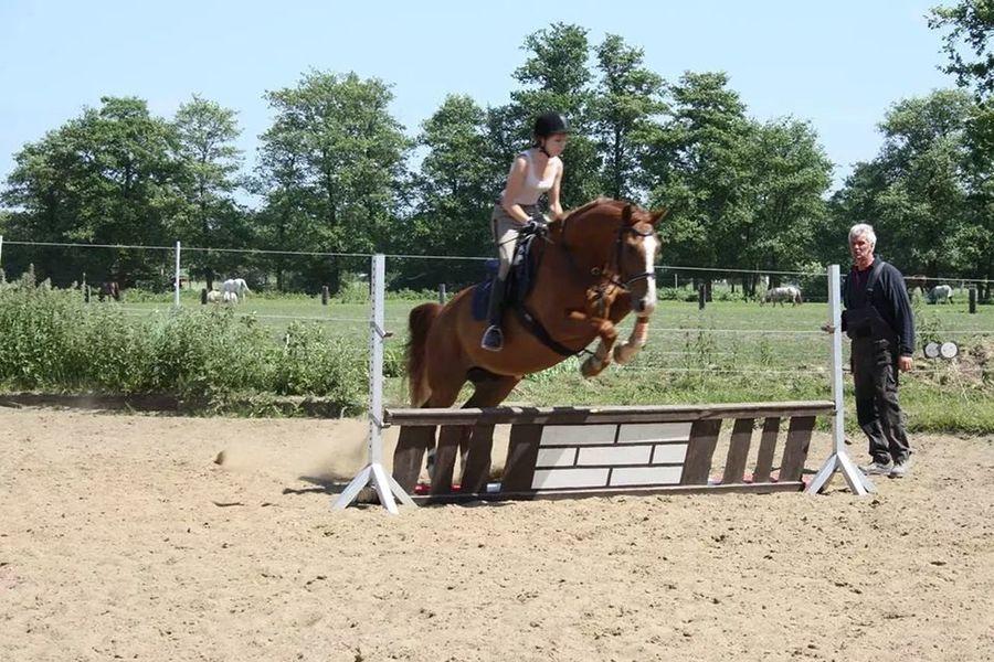 Showjumping Horse Enjoying Life Albion