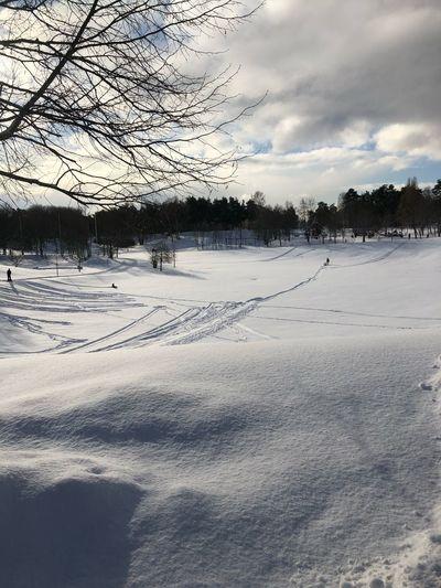 Winter Snow Cold Temperature Tree