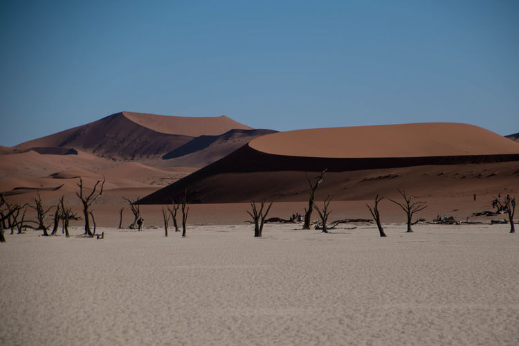 Dead Tree Endless Namibia Nature Sossuvlei, Namibia Africa African Beauty Beauty In Nature Clear Sky Desert Dry Landscape Outdoors Remote Sand Sand Dune Scenics - Nature Sky First Eyeem Photo