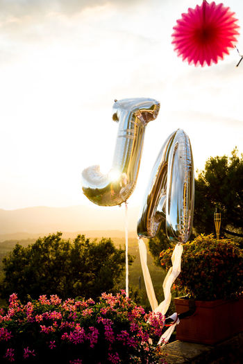 Backlight Celebration Sunlight Wedding Yes Balloon Ballooning Festival Beauty In Nature Celebrating Celebration Event Close-up Day Flower Flower Head Fragility Freshness Growth Nature No People Outdoors Plant Sky Tree Wedding Day Wedding Party