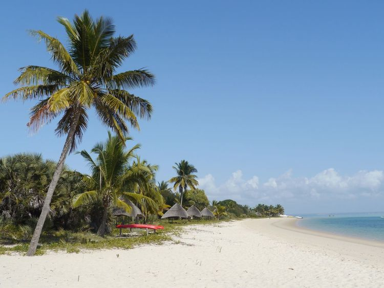 Secluded tropical beach Mozambique Hideaway Barefoot Luxury Robinson Island Coconut Palm Tree Beautiful Lodge White Sand Beach Benguerra Barazuto Archipelago Indian Ocean Best Beaches In The World Secluded Beach Beach Palm Tree Sand Sea Tranquil Scene Scenics Tree Summer Exploratorium