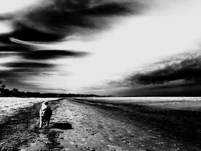 Taking Photos Enjoying Life Home Is Where The Art Is Past Uruguay Lights And Shadows Throw The Glass Blackandwhite Golden Retriever Lights Sand & Sea Landscape Life Is A Beach Sea And Sky Playa