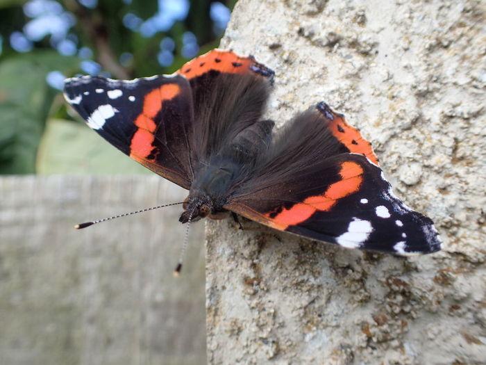 Butterfly Garden Photography British Summer Close-up