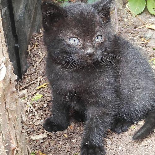Luna Black Kitten Kitten Black Cat Animal Themes One Animal Pets Domestic Animals Close-up