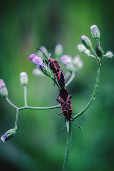 Bug lovers... EyeEm Selects Insect Animals In The Wild Animal Themes Animal Wildlife One Animal Nature Close-up Green Color Flower Outdoors Beauty In Nature