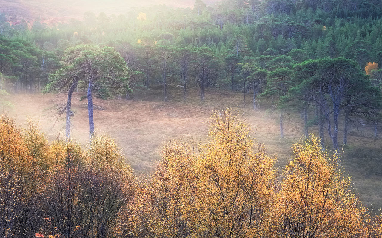 tree, nature, beauty in nature, tranquility, tranquil scene, forest, scenics, no people, growth, outdoors, day, landscape, autumn, water, sky