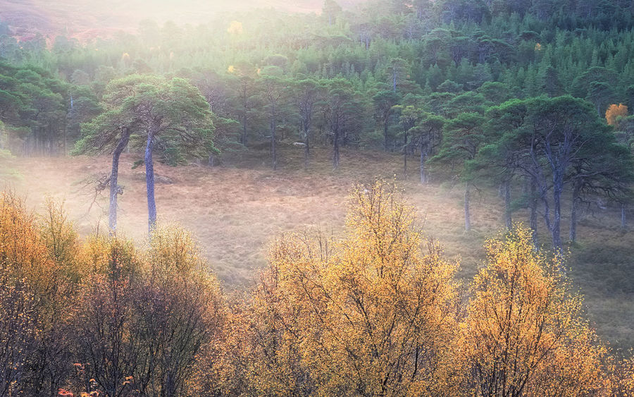 My Place: Early Autumn morning light, mist among trees in the Caledonian Forest reserve, Glen Affric. Autumn Autumn Colors Beauty In Nature Caledonian Forest Highlands Landscape Landscape_Collection Landscape_photography Light Mist Misty Morning Nature No People Outdoors Scenics Scotland Scotland 💕 Sunlight Tranquil Scene Tranquility Tree Trees Trees And Nature The Great Outdoors - 2017 EyeEm Awards