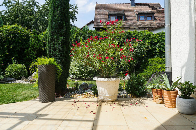 Potted plants outside house in garden