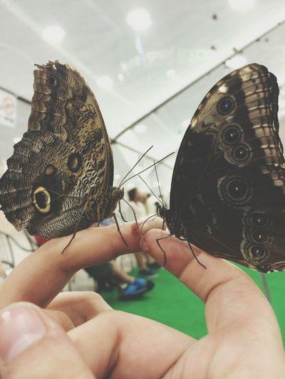 Butterfly Tulsa Oklahoma