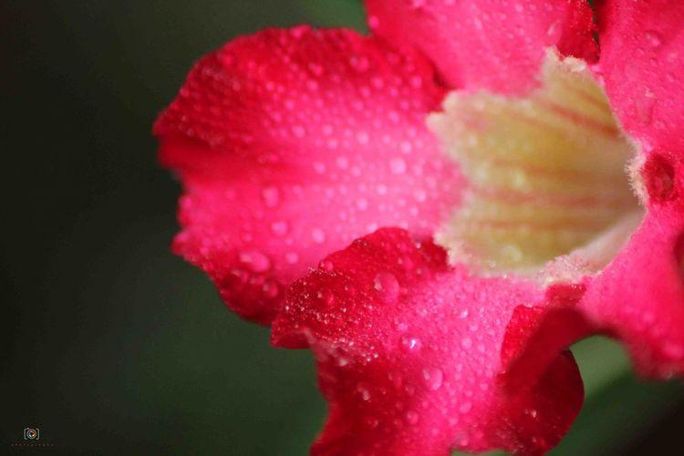 Fresh Flower. Flowers