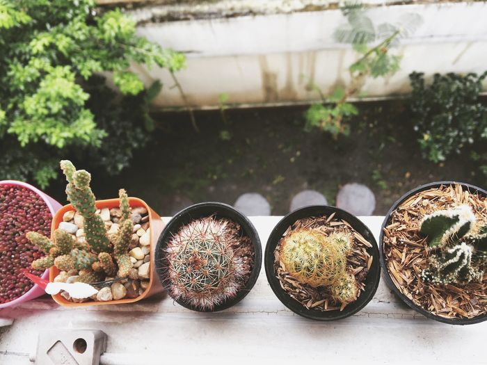 cactus🌵 Cactus No People Day Plant Focus On Foreground Nature Outdoors Growth First Eyeem Photo
