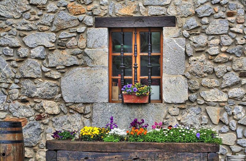 Flower pots against window sill