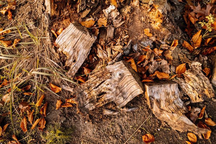 Full frame shot of dry leaves on log in forest