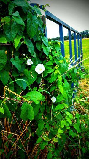 Dorfkind Nature Blossom Plants Doorway Tor Spaziergang Open Focus Perspective