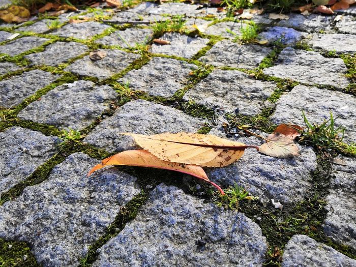 Autumn beauty Leaf High Angle View Sunlight Close-up Stone Tile Fallen Fall Autumn Fallen Leaf Ground A New Perspective On Life