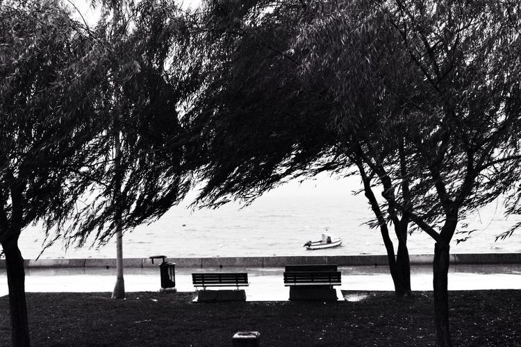 Alone... Black & White Viewpoint Esinti