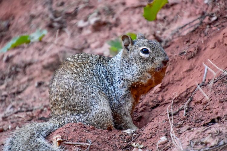 Squirrel Animal Themes Animal One Animal Animal Wildlife Rodent Mammal Animals In The Wild Squirrel Close-up